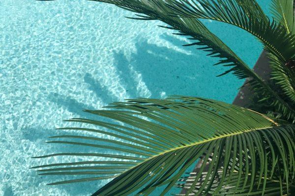 pool-palm-tree